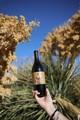 2020 Little Secrets, Carbonic Gamay, El Dorado County, Barsotti Vineyard - View 4